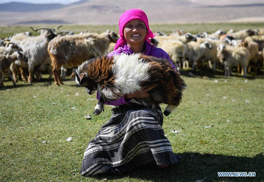 A woman holds a goat for shearing in Tangxi Village, Xigaze, southwest China\'s Tibet Autonomous Region, June 22, 2018. As the temperature rise, it is the time for shearing in Xigaze. (Xinhua/Liu Dongjun)