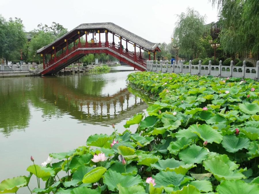 Lotus flowers in full bloom at the Yu river scenic area in Kaifeng city, Henan Province on June 25. Summer is the prime season for lotus. The pink blossoms appear to be floating on the water, while the roots are hidden deep underneath. (Photo/Asianewsphoto)