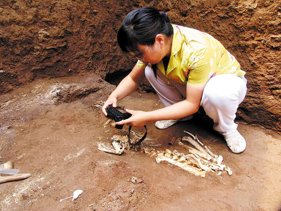 Zooarchaeologist Hu Songmei photographs a skeleton at a tomb in Xi\'an, Shaanxi province, where she and colleagues found the bones of an extinct gibbon. (Photo provided to CHINA DAILY)  Gibbons belong to a family of primates known as lesser apes. There are more than a dozen living gibbon species, all native to Asia. The apes have played an important role in Chinese culture for thousands of years and are present in ancient literature and art.  Despite their likely venerated status, researchers believe Junzi imperialis\'s extinction could have been human-driven. If so, the skull fragment provides some of the earliest evidence of the extinction of an ape species due to historic hunting and capture or habitat loss.