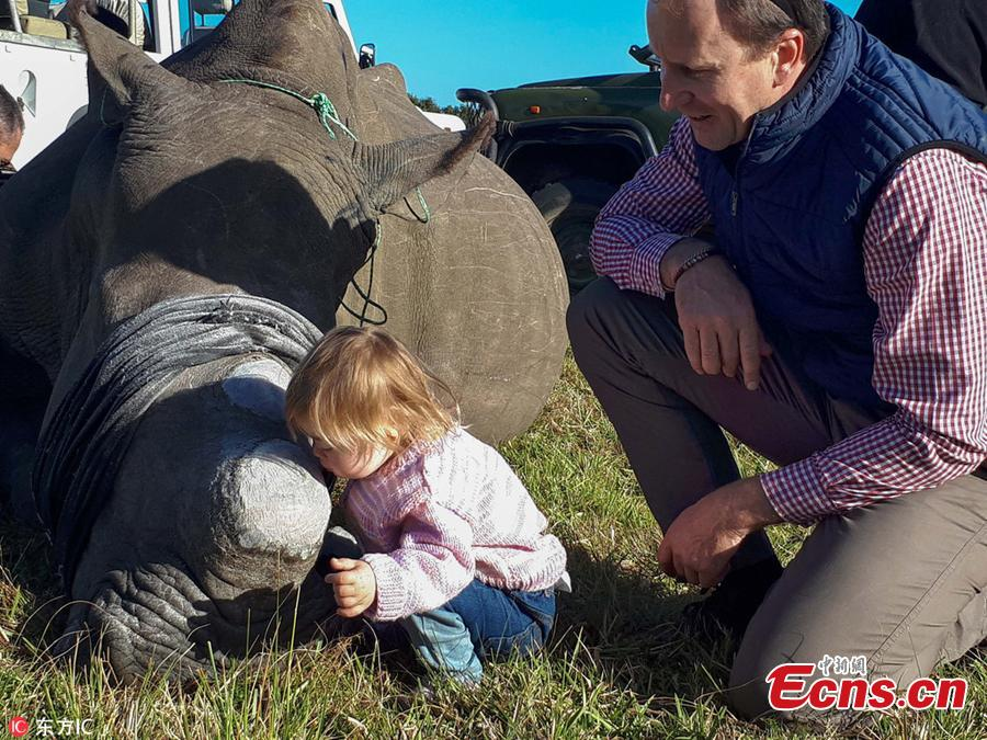 Photo taken by Ayesha Cantor shows three-year-old girl Ava kisses the rhino Chunk, which was dehorned by conservation workers as a deterrent to poaching in a nature reserve in Port Elizabeth, South Africa. (Photo/IC)
