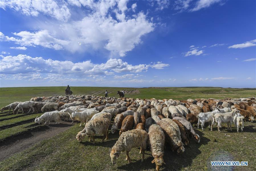 Herdsmen take their sheep to graze at the summer pasture on the Barlik Mountain in Yumin County, northwest China\'s Xinjiang Uygur Autonomous Region, June 22, 2018. Local herdsmen have transferred their livestock to summer pastures on the Barlik Mountain since late June and will stay here until September. Local authorities has devoted efforts in recent years to protect the ecological environment on the pasture and upgrade driveways to improve the infrastructure construction in the pasturing area. (Xinhua/Hu Huhu)