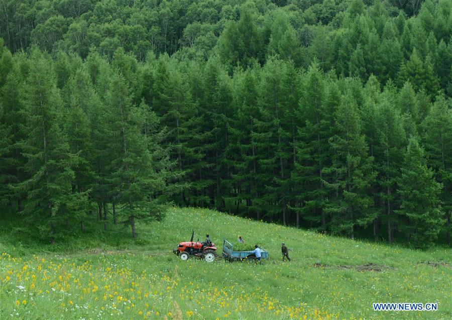 Photo taken on July 11, 2013 shows workers transporting seedlings at the Saihanba forest in Weichang Man and Mongolian Autonomous County of Chengde City, north China\'s Hebei Province. Comprehensive progress has been made since the report delivered at the 18th National Congress of the Communist Party of China (CPC) in 2012 included ecological development as a major task in the country\'s overall plan and proposed building a \