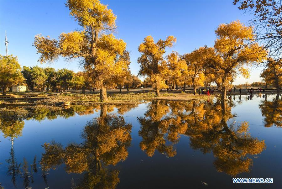Photo taken on Oct. 13, 2017 shows the trees of populus euphratica trees in Ejin Banner, north China\'s Inner Mongolia Autonomous Region. Comprehensive progress has been made since the report delivered at the 18th National Congress of the Communist Party of China (CPC) in 2012 included ecological development as a major task in the country\'s overall plan and proposed building a \