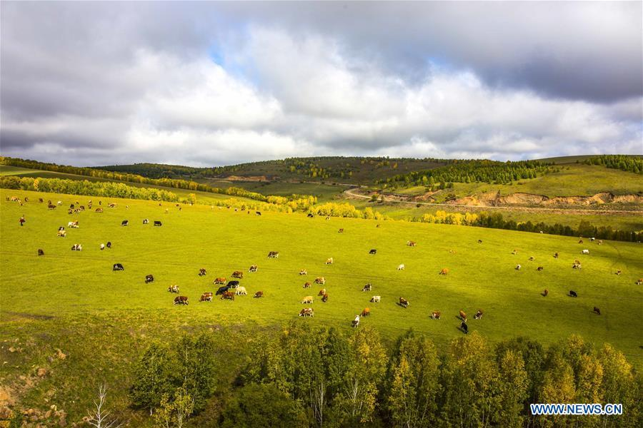 Photo taken on Sept. 12, 2017 shows a grassland in Hulun Buir, north China\'s Inner Mongolia Autonomous Region. Comprehensive progress has been made since the report delivered at the 18th National Congress of the Communist Party of China (CPC) in 2012 included ecological development as a major task in the country\'s overall plan and proposed building a \