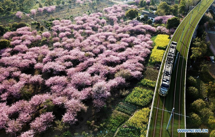 A tramcar runs past begonia flowers in Suzhou, east China\'s Jiangsu Province, March 28, 2018. Comprehensive progress has been made since the report delivered at the 18th National Congress of the Communist Party of China (CPC) in 2012 included ecological development as a major task in the country\'s overall plan and proposed building a \
