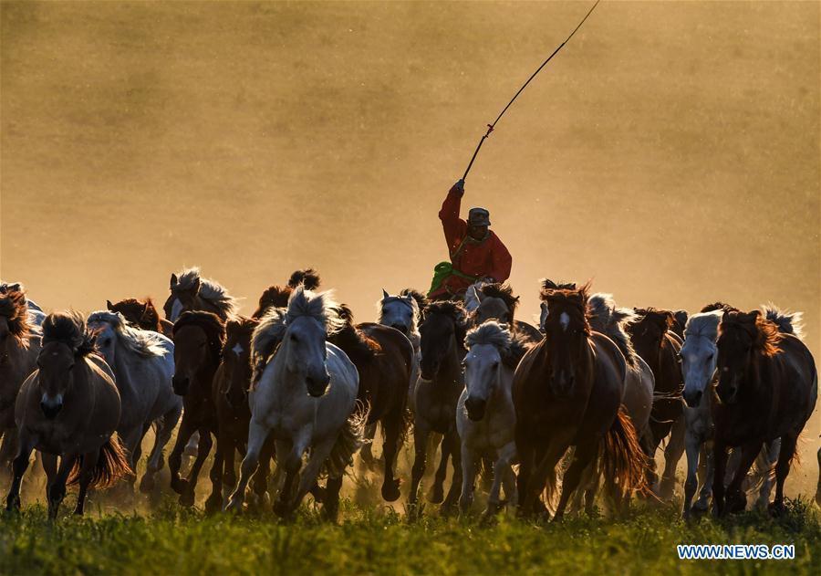 A herdsman drives horses on a grassland in Hexigten Qi of Chifeng City, north China\'s Inner Mongolia Autonomous Region, June 29, 2018. (Xinhua/Peng Yuan)