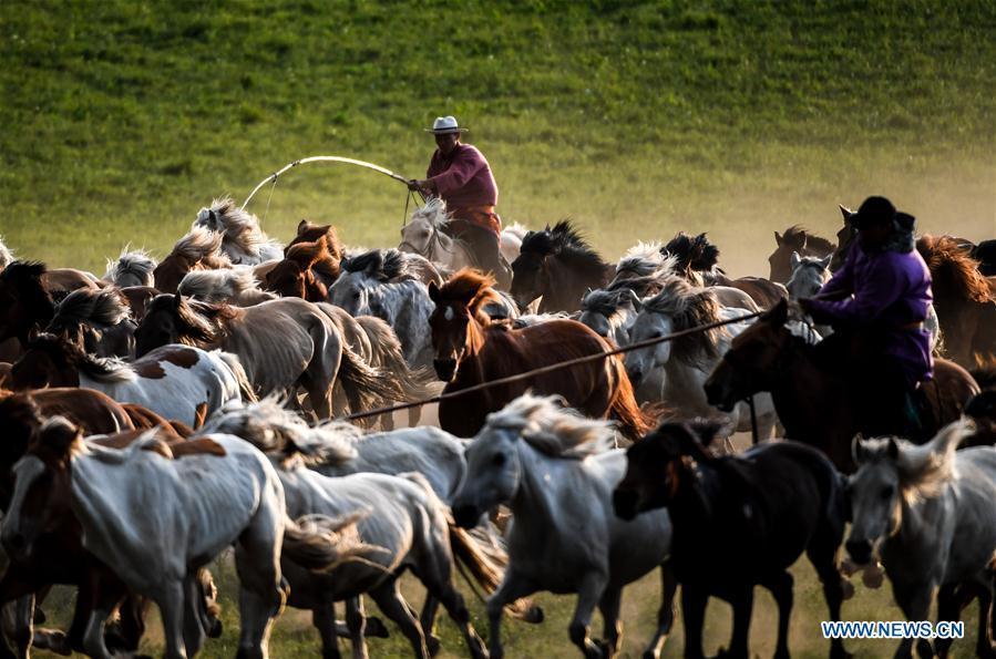 Herdsmen drive horses on a grassland in Hexigten Qi of Chifeng City, north China\'s Inner Mongolia Autonomous Region, June 30, 2018. (Xinhua/Peng Yuan)
