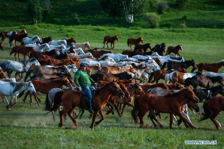 A herdsman drives horses on a grassland in Hexigten Qi of Chifeng City, north China\'s Inner Mongolia Autonomous Region, June 29, 2018. (Xinhua/Yu Dongsheng)