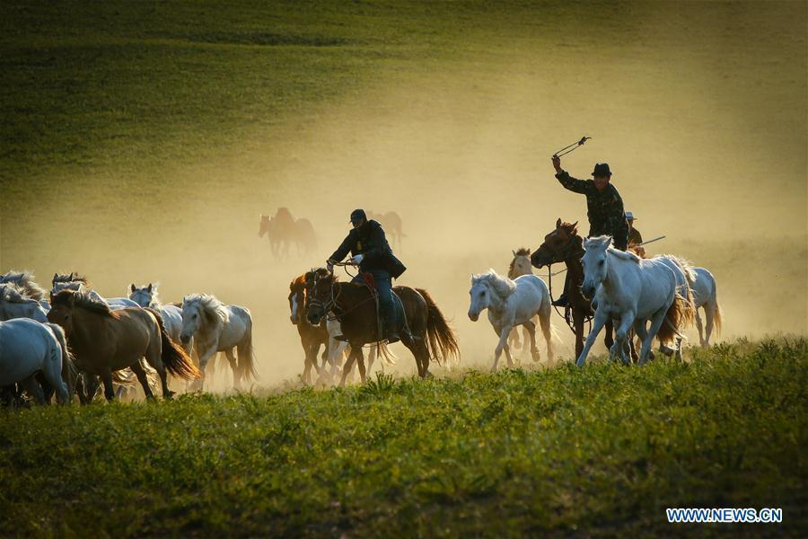 Herdsmen drive horses on a grassland in Hexigten Qi of Chifeng City, north China\'s Inner Mongolia Autonomous Region, June 29, 2018. (Xinhua/Yu Dongsheng)