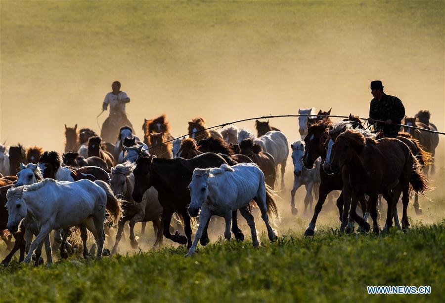 Herdsmen drive horses on a grassland in Hexigten Qi of Chifeng City, north China\'s Inner Mongolia Autonomous Region, June 29, 2018. (Xinhua/Peng Yuan)
