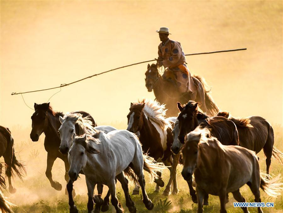 A herdsman drives horses on a grassland in Hexigten Qi of Chifeng City, north China\'s Inner Mongolia Autonomous Region, June 30, 2018. (Xinhua/Peng Yuan)