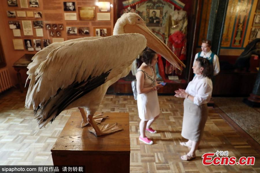 A taxidermied pelican on display at the museum of Moscow's Durov Animal Theatre (Grandpa Durov\'s Corner) founded by circus artist and tamer Vladimir Durov in 1912. (Photo/Sipaphoto)