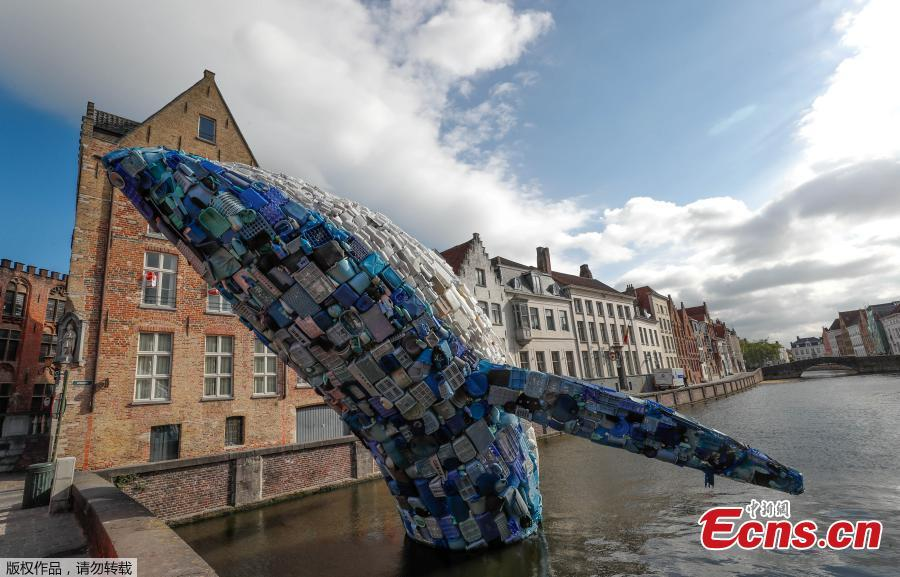 Brooklyn-based architecture and design firm StudioKCA has created an incredible installation for the Bruges Triennial, in response to the estimated 150 million tons of plastic trash currently in the ocean. Skyscraper (the Bruges Whale) is a 38-foot-tall whale fabricated from 5 tons of plastic waste fished from the Pacific and the Atlantic Oceans. (Photo/Agencies)
