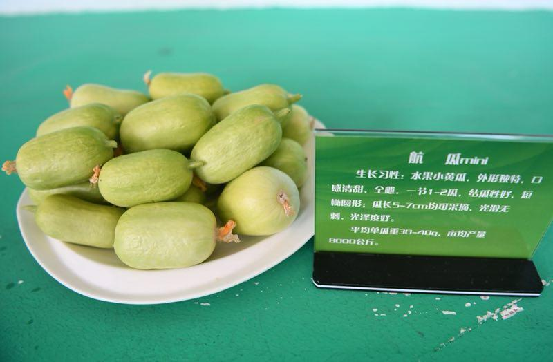 Fruit cucumbers are on display at the exhibit.  (Photo by Lang Kai)