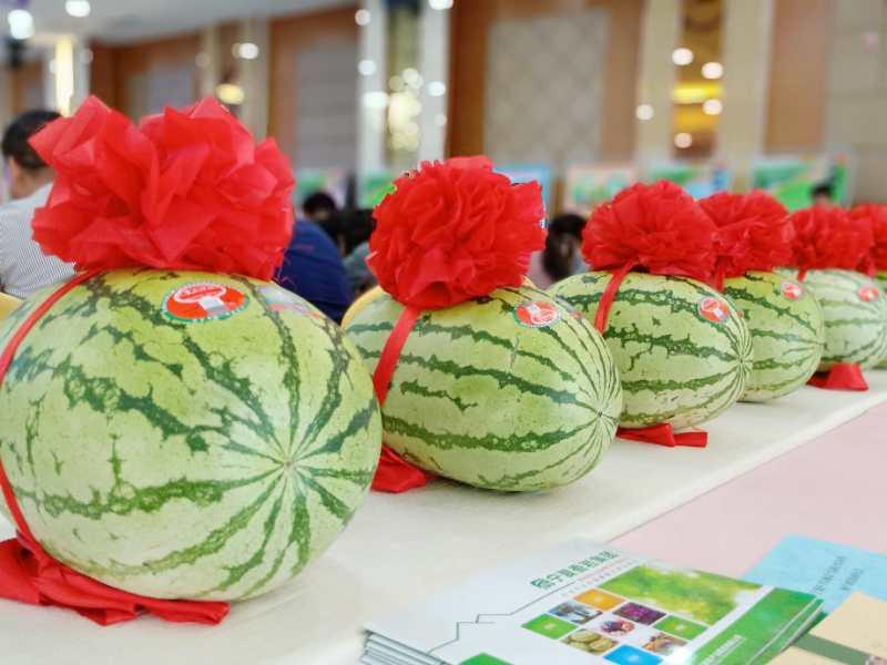 Watermelons are on display at the exhibit. (Photo by Lang Kai)