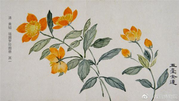 A painting by Qing Dynasty artist Huang Yue portrays globeflowers.  (Photo/Official Weibo account of the Palace Museum)