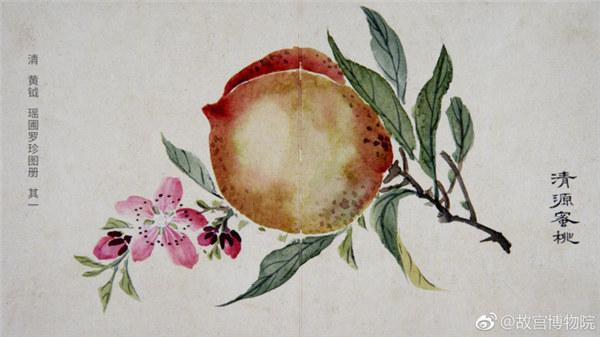 A painting by Qing Dynasty(1644-1911) artist Huang Yue portrays a peach. (Photo/Official Weibo account of the Palace Museum)  In celebration of summer, the Palace Museum in Beijing has shared a range of photos featuring ancient paintings of vegetables and fruits with netizens on the micro blog Sina Weibo. The paintings, which depict seasonal fruits, are quite vivid and arouse people\'s appetites.