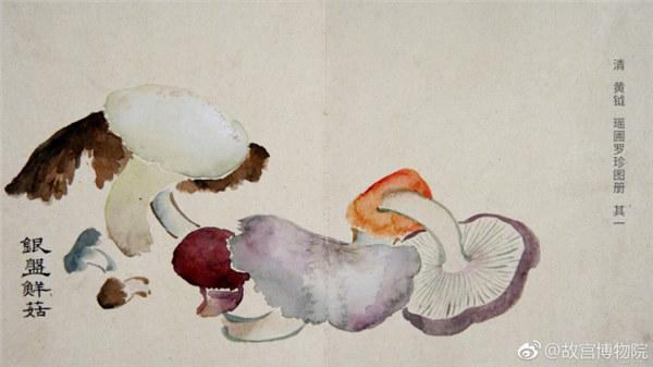 A painting by Qing Dynasty artist Huang Yue portrays fresh mushrooms.  (Photo/Official Weibo account of the Palace Museum)