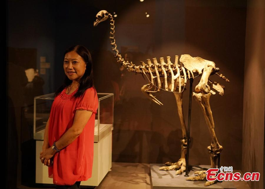 The Treasures of the Natural World exhibition in Taipei, July 3, 2018. London's Natural History Museum presented 227 peculiar exhibits for the exhibition, each showcasing a different aspect of natural history. (Photo: China News Service/Zhang Yu)