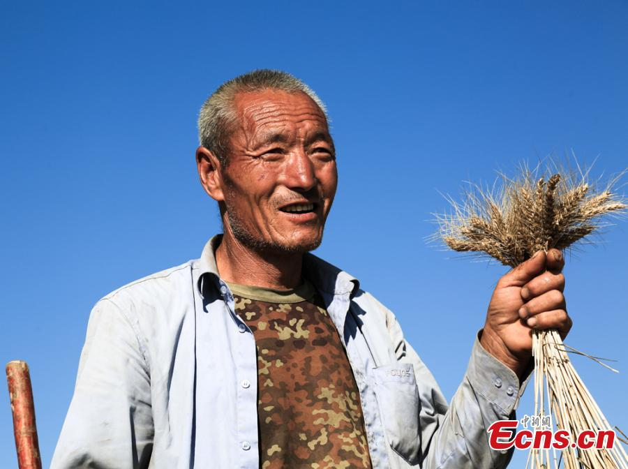A man shows newly harvested wheat in Huanxian County, Northwest China's Gansu Province. (Photo: China News Service/Zhang Yongxin)