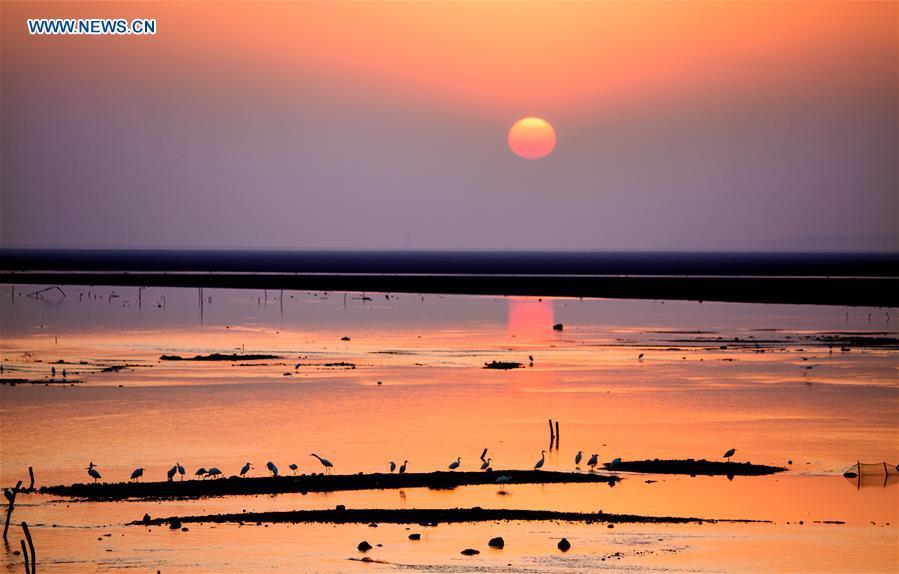 Photo taken on Dec. 28, 2017 shows sunset scenery of the Poyang Lake wetland in east China\'s Jiangxi Province. China, with a total wetland area of 53.6 million hectares, ranks first in Asia and fourth in the world, official data showed. The statistics were released by the National Forestry and Grassland Administration at the Eco Forum Global Annual Conference held in southwest China\'s Guizhou Province. China has 57 wetlands that are of international importance, 602 wetland nature reserves and 898 national wetland parks, according to the administration. In the country\'s wetland ecosystem, there are 4,220 species of plant and 2,312 species of animals, with the wetland protection rate reaching 49 percent, the statistics showed. (Xinhua/Fu Jianbin)