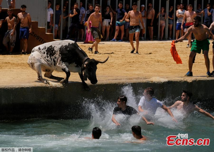 A bull and revelers jump into the sea during the \
