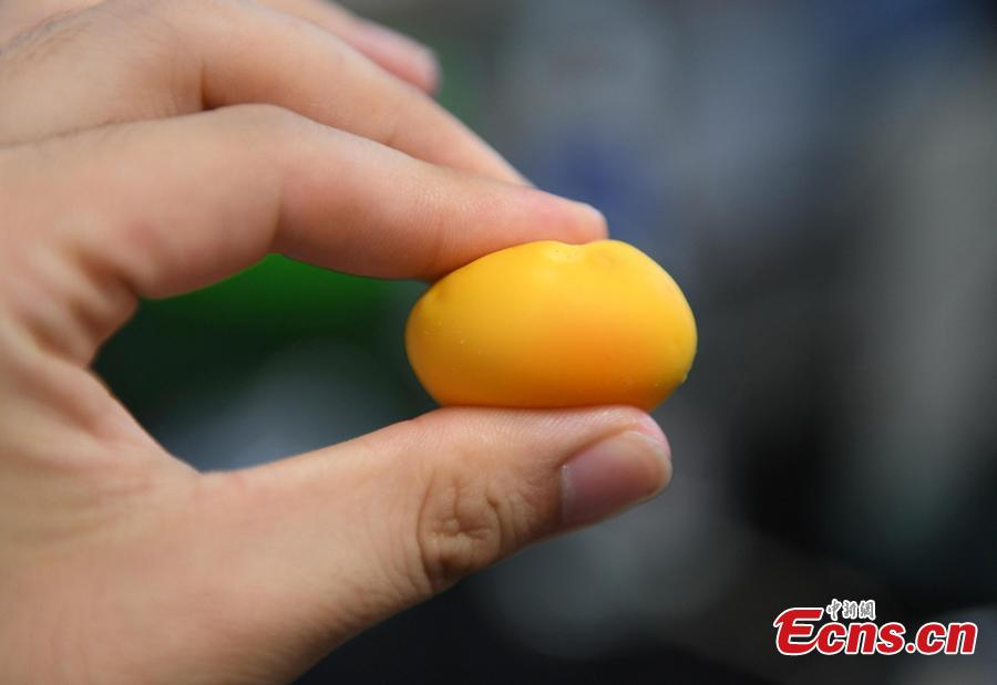 A researcher conducts an experiment to compare eggs in order to check on rumors about food safety in Hangzhou City, East China's Zhejiang Province, July 10, 2018. Zhejiang University and Hangzhou City Market Supervision Bureau launched the test to inform the public about rumors such as using plasticizing agents in noodles, fake bouncing eggs and use of contraceptive pills in rice field eel farming. (Photo: China News Service/Wang Gang)
