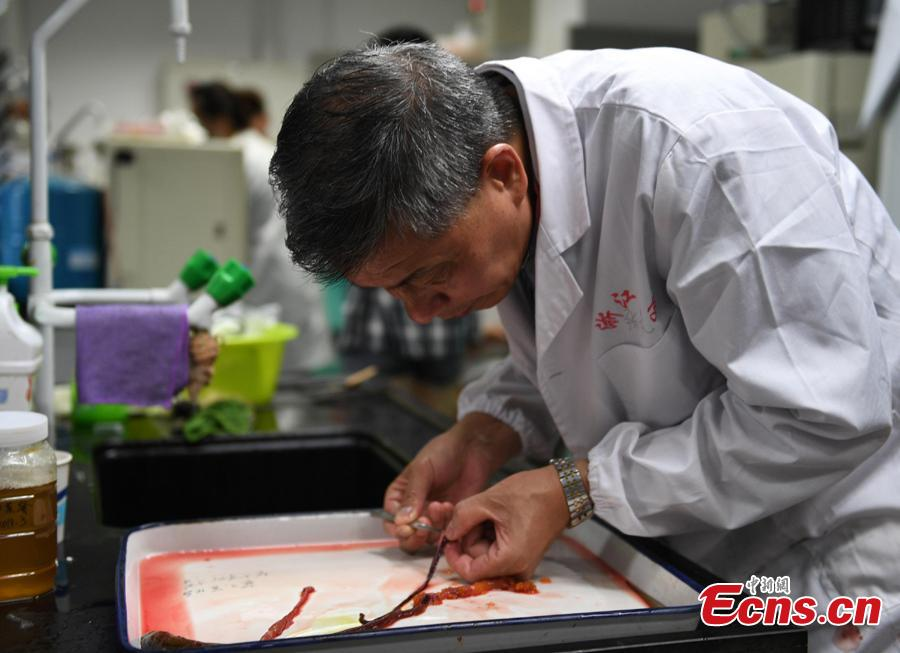 A researcher studies a rice field eel to check rumors about food safety in Hangzhou City, East China's Zhejiang Province, July 10, 2018. Zhejiang University and Hangzhou City Market Supervision Bureau launched the test to inform the public about rumors such as using plasticizing agents in noodles, fake bouncing eggs and use of contraceptive pills in rice field eel farming. (Photo: China News Service/Wang Gang)