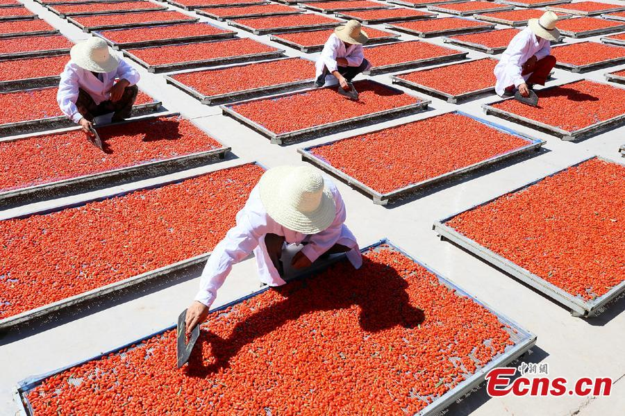 Workers air goji berries, also known as wolfberries, in Linze County, Zhangye City, Guansu Province, July 9, 2018, as the harvest season begins. (Photo: China News Service/Zhang Yuan)