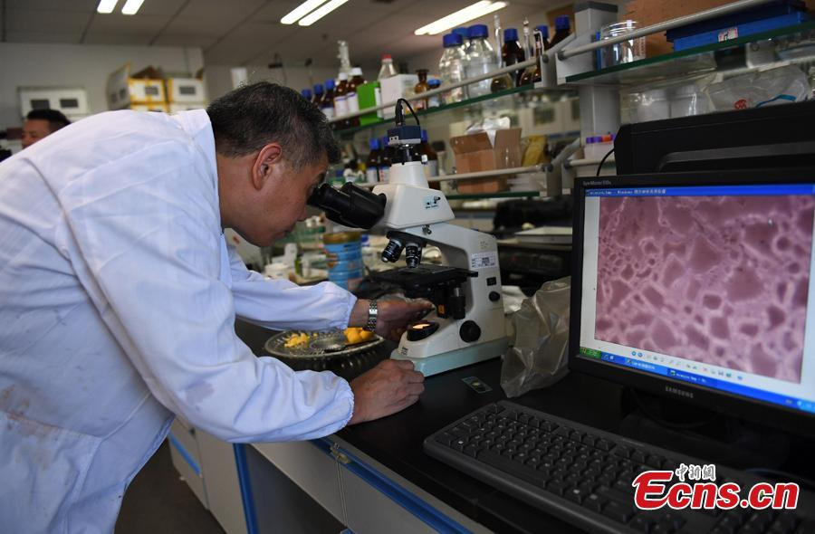 A researcher conducts an experiment to compare flour to check rumors about food safety in Hangzhou City, East China's Zhejiang Province, July 10, 2018. Zhejiang University and Hangzhou City Market Supervision Bureau launched the test to inform the public about rumors such as using plasticizing agents in noodles, fake bouncing eggs and use of contraceptive pills in rice field eel farming. (Photo: China News Service/Wang Gang)