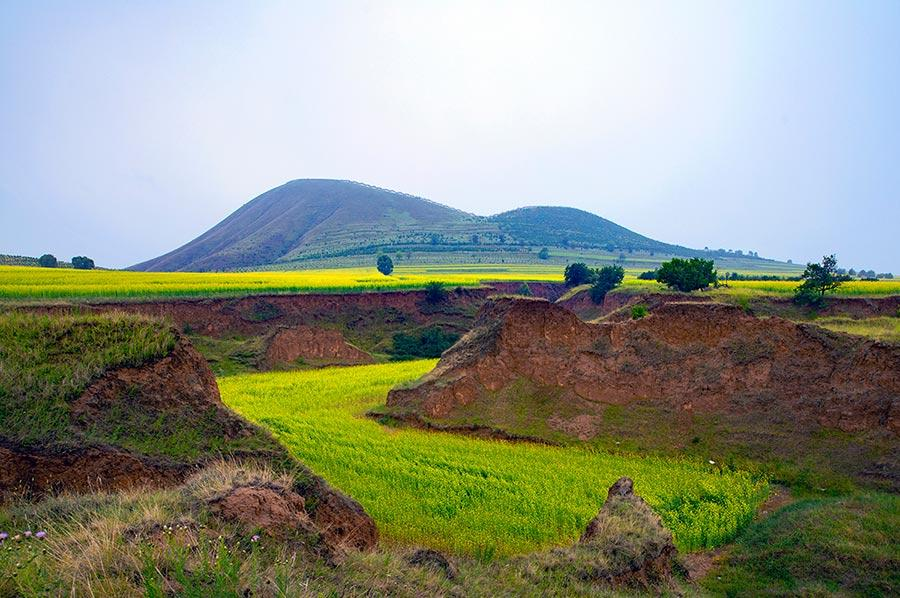 Cole flowers flourish at the feet of volcanoes in Datong, North China\'s Shanxi Province. The sea of cole flowers and the volcanoes add radiance and beauty to one another. (Photo/China Daily)