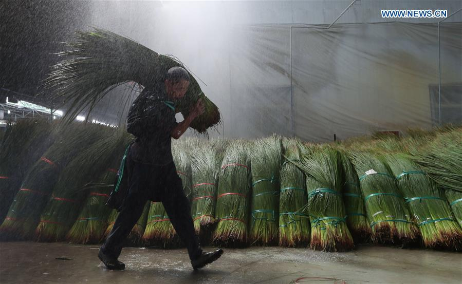 A worker carries bundled soft rush straws for a rinsing process in a factory in Dongpo District of Meishan, southwest China\'s Sichuan Province, July 13, 2018. Meishan is a major producer and exporter of soft rush (Juncus effusus) in China. The straws of soft rush are widely used as a weaving material for mats and sheets. (Xinhua/Jiang Hongjing)