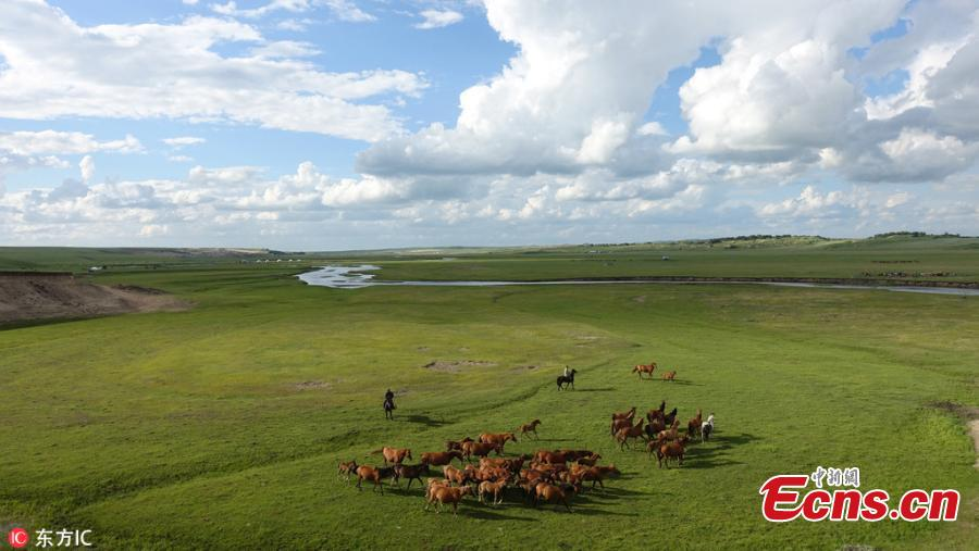 A view of an area of the Hulun Buir grassland in north China\'s Inner Mongolia Autonomous Region. It is now the best time of the year to visit the lush grassland. (Photo/IC)