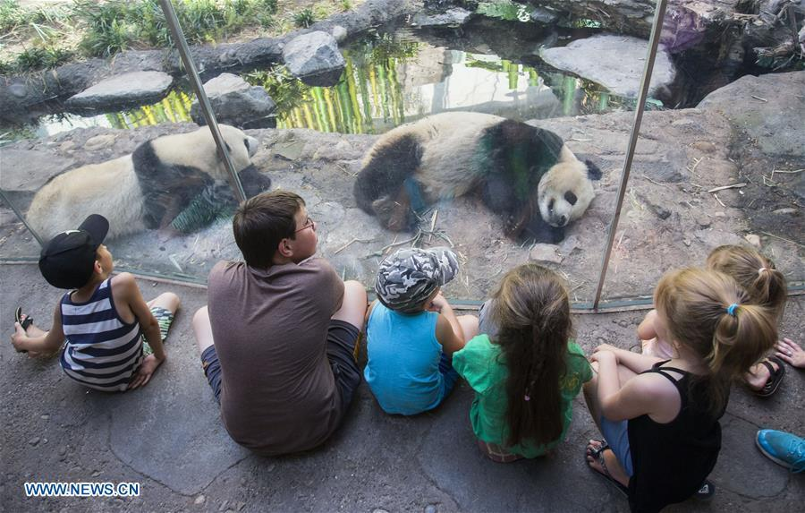 People visit Panda Passage at the Calgary Zoo in Calgary, Canada, on July 16, 2018. After moving to the Calgary Zoo from Toronto in March, giant panda cubs Jia Panpan, Jia Yueyue, their mother Er Shun and male adult giant panda Da Mao are expected to attract lots of visitors in the summer holiday. (Xinhua/Zou Zheng)