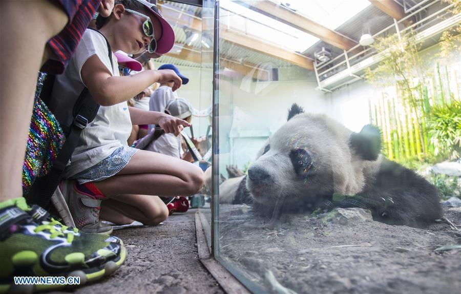 People look at a giant panda at Panda Passage of the Calgary Zoo in Calgary, Canada, on July 16, 2018. After moving to the Calgary Zoo from Toronto in March, giant panda cubs Jia Panpan, Jia Yueyue, their mother Er Shun and male adult giant panda Da Mao are expected to attract lots of visitors in the summer holiday. (Xinhua/Zou Zheng)
