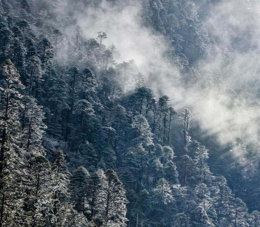 Photo taken on Oct. 31, 2017 shows a primeval forest in Lhunze County of Shannan City, southwest China\'s Tibet Autonomous Region. (Xinhua/Purbu Zhaxi)