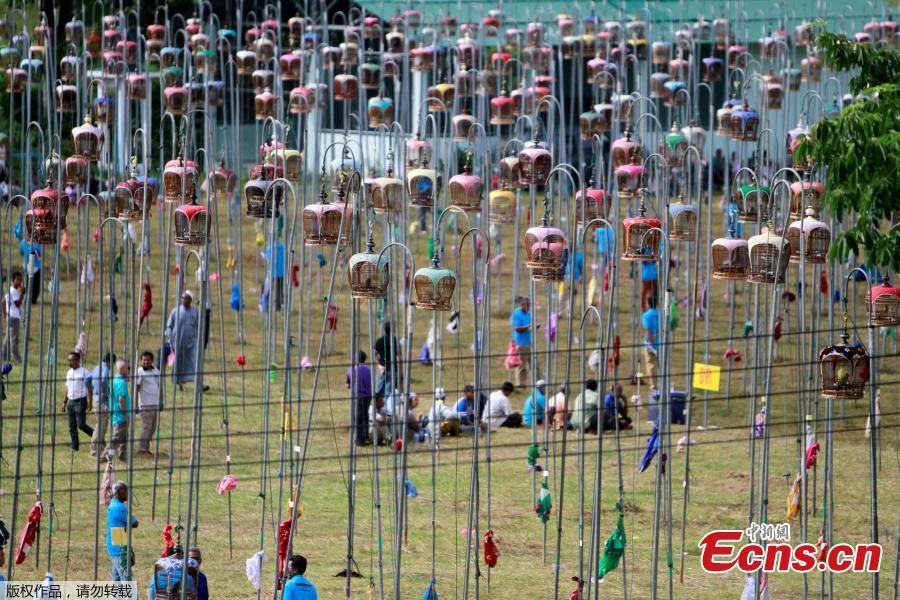Thai Muslim villagers take part in a bird-singing contest in the southern province of Pattani, Thailand, July 22, 2018. (Photo/Agencies)