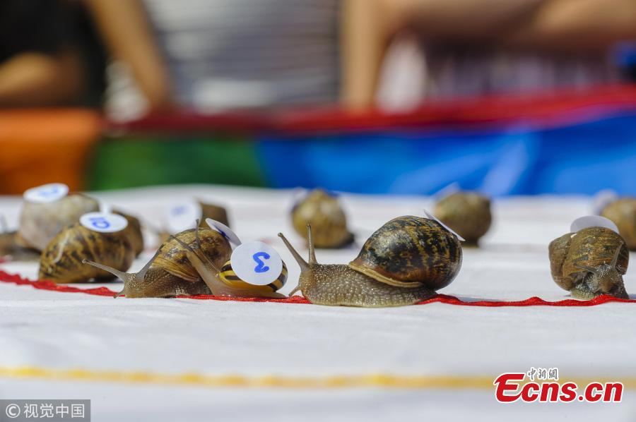 The first heat of the World Championship Snail Racing gets underway which was held at Congham Village Fete on July 21, 2018 in King\'s Lynn, England. Over 100 snails have been taking part in the World Snail Racing Championships. Held in Congham near Kings Lynn, the championships which have been going for over 25 years form part of the village Fete to raise money for St Andrew\'s Church. (Photo/VCG)