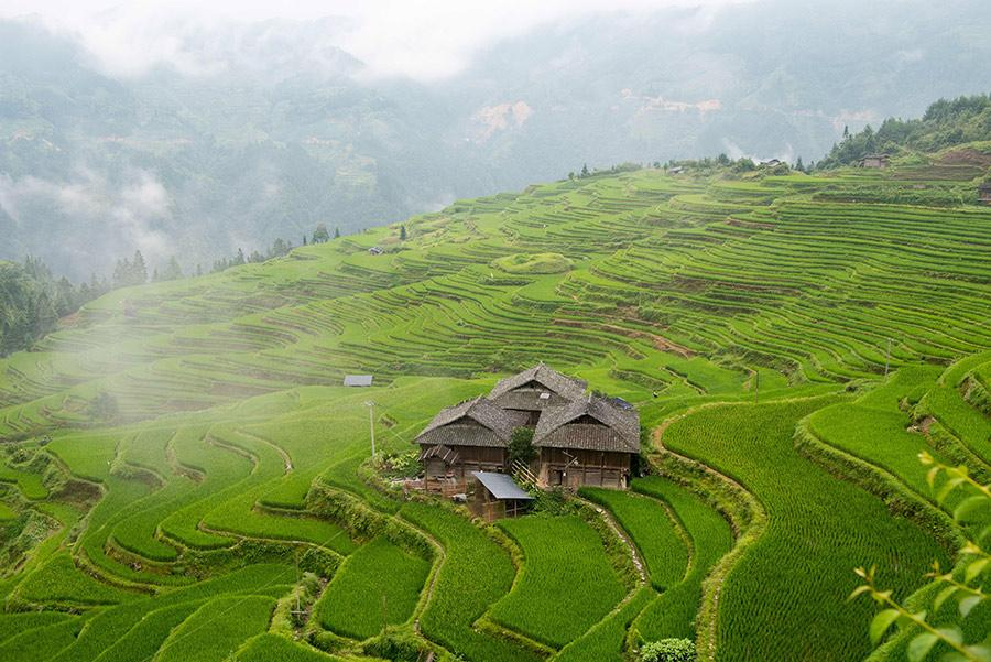 Mist rises above the lushly green terraced fields in Jiabang, Southwest China\'s Guizhou Province, after a heavy summer rain, July 24, 2018. A cluster of village houses stand out in the vast landscape, creating an idyllic and refreshing scene. (Photo/Asianewsphoto)
