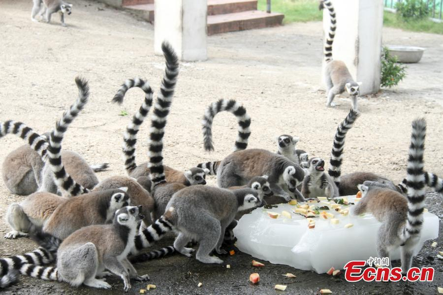 Animals try all possible ways to keep cool on a hot summer\'s day at Wuxi Zoo in Wuxi City, East China's Jiangsu Province, July 24, 2018 . The zoo offered ice cubes, watermelon, air-conditioners and automatic water spraying devices to help the animals deal with the summer heat wave. (Photo: China News Service/Sun Quan)