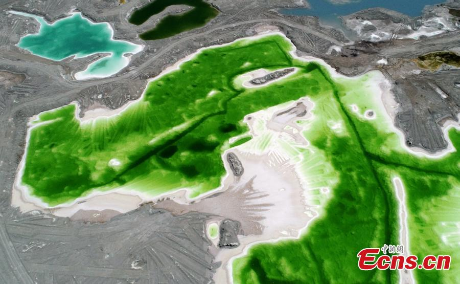 Da Qaidam salt lake in Haixi Mongol and Tibetan Autonomous Prefecture, Qinghai Province, July 25, 2018. The salt lake covering six square kilometers was formed by many years of mining, leaving a high concentration of salt called brine. It was named Emerald Lake because of its different and beautiful colors against the blue sky and snow-covered mountains. (Photo: China News Service/Liu Zhongjun)