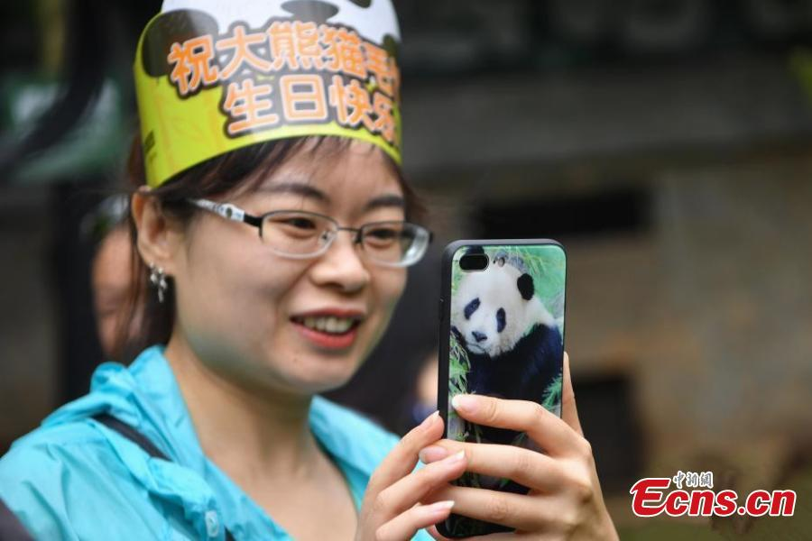 A visitor takes a picture of giant panda Mao Zhu during its 4thbirthday celebration at Yunnan Wildlife Zoo in Kunming City, Southwest China's Yunnan Province, July 26, 2018. (Photo: China News Service/Liu Ranyang)