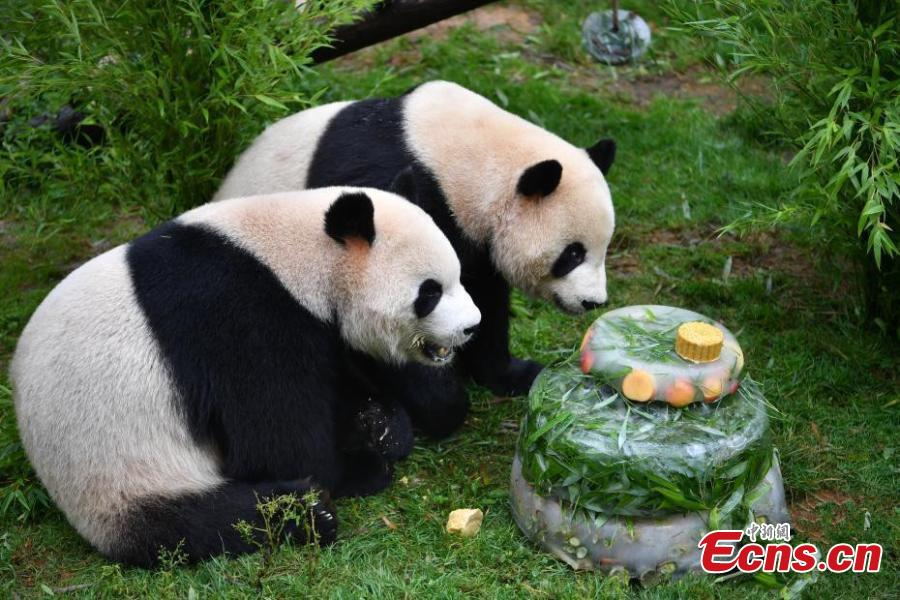 <?php echo strip_tags(addslashes(Giant panda Mao Zhu enjoys a special cake made for its 4thbirthday celebration at Yunnan Wildlife Zoo in Kunming City, Southwest China's Yunnan Province, July 26, 2018. (Photo: China News Service/Liu Ranyang))) ?>