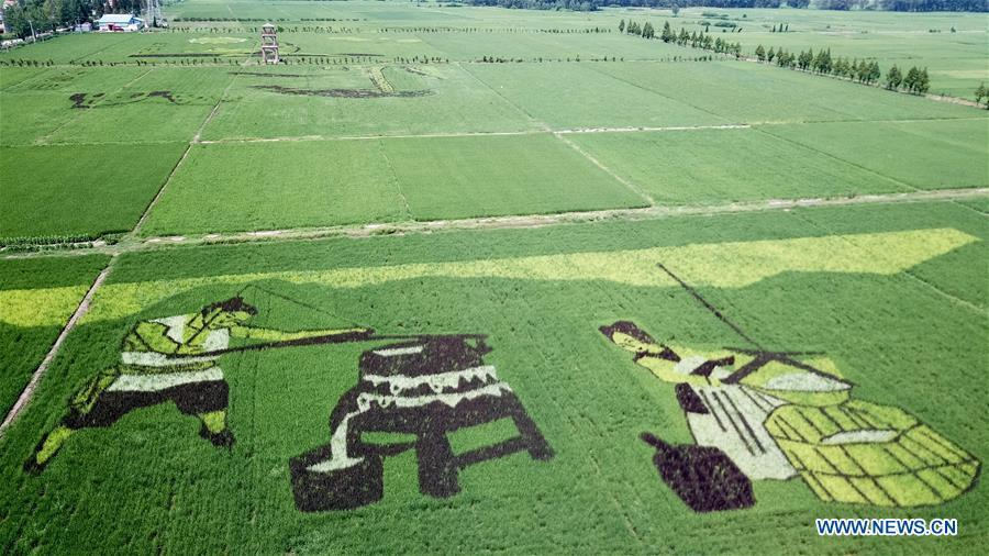 Photo taken on July 29, 2018 shows rice paddy art pictures in Shouxian County, east China\'s Anhui Province. (Xinhua/Zhang Duan)