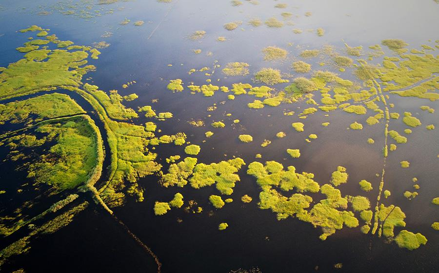 In the midsummer, the Poyang Lake wetland is surrounded by green grass and water. Poyang Lake wetland, China\'s largest freshwater lake, is one of the first seven wetlands to be listed on the list of internationally important wetlands. It is rich in flora and fauna and has unique natural landscapes. (Photo/China Daily)