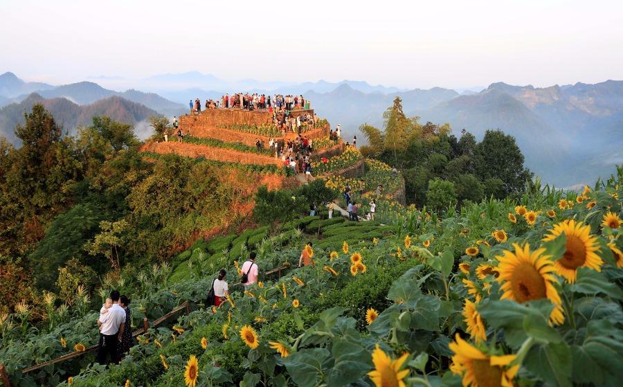 Tourists enjoy the sight of blossoming sunflowers amid the mountains in Shitan ancient village, She county, Anhui Province, July 29, 2018. Villagers have sunflowers planted around their houses and along both sides of the road, creating a bright attraction for visitors. (Photo/Asianewsphoto)