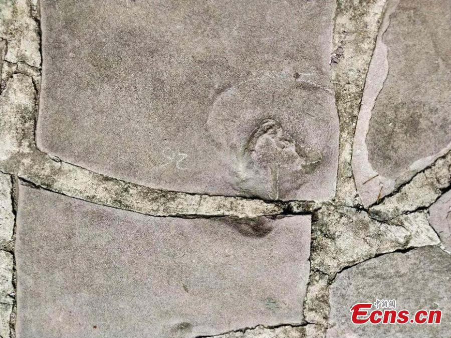 A team led by Xing Lida, a paleontologist with China University of Geosciences (Beijing), has found 250 dinosaur footprints of various sizes in stone slabs in Mountain Resort and its Outlying Temples in Chengde City, Hebei Province. The Mountain Resort (the Qing Dynasty\'s summer palace), built between 1703 and 1792, is a vast complex of palaces and administrative and ceremonial buildings. It was inscribed as a UNESCO World Heritage site in 1994. The stone slabs, used for construction from 1987 to 1990, were mainly from Yanshan Mountains, where dinosaurs lived approximately 150 million years ago. (Photo: China News Service/Wang Bo)