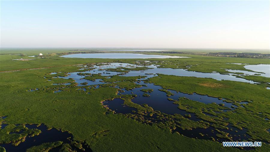 Aerial photo taken on July 31, 2018 shows the scenery of Zhalong National Nature Reserve in Qiqihar, northeast China\'s Heilongjiang Province. Zhalong National Nature Reserve, covering 2,100 square kilometers, was set up in 1979 in a northeast China\'s reed wetland. It provides a major habitat for red-crowned cranes and other wildlife. (Xinhua/Wang Kai)