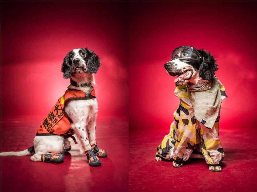 Rescue dog Kugou wears a uniform and a fashionable sun-resistant outfit. Despite being 15 months old, the dog performed so well during the national rescue dog contest that handlers didn\'t realize it was injured until the end of the event. (Photo/Asianewsphoto)