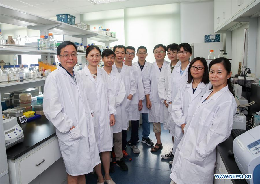 Qin Zhongjun, a molecular biologist, and his team and students pose for photo at the Center for Excellence in Molecular Plant Sciences, Shanghai Institute of Plant Physiology and Ecology, of Chinese Academy of Sciences in Shanghai, east China, July 31, 2018. Brewer\'s yeast, one-third of whose genome is said to share ancestry with a human\'s, has 16 chromosomes. However, Chinese scientists have managed to fit nearly all its genetic material into just one chromosome while not affecting the majority of its functions, according to a paper released Thursday on Nature\'s website. Qin Zhongjun and his team used CRISPR-Cas9 genome-editing to create a single chromosome yeast strain, the paper said. (Xinhua/Ding Ting)